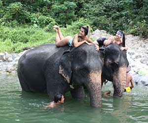 Camp Chang Kalim Elephant Riding Shower Elephant Patong Beach